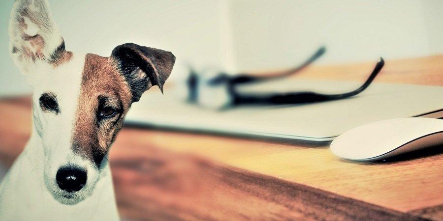 Pes je lepší ako žena - všetky dôvody pokope