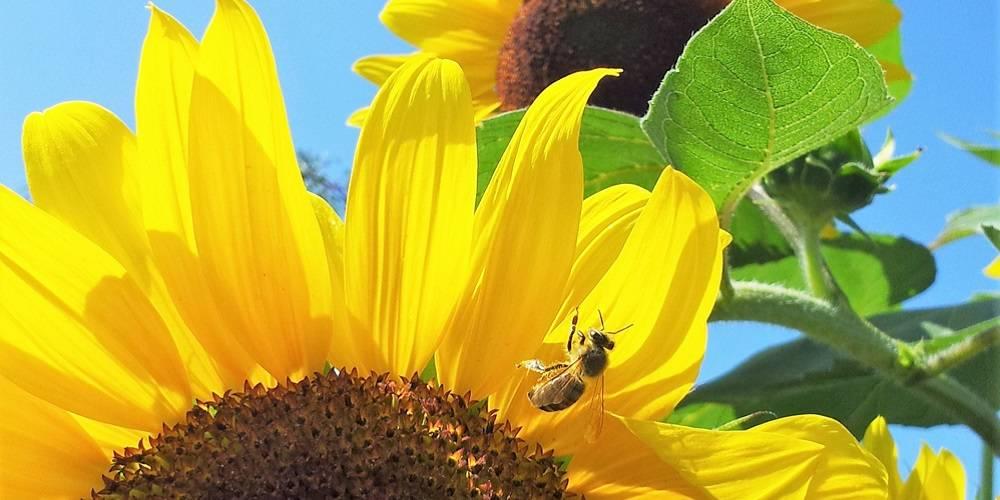Keby včely mali mozog, pekne rýchlo by sme vykapali. Všetci. Aj s včelami