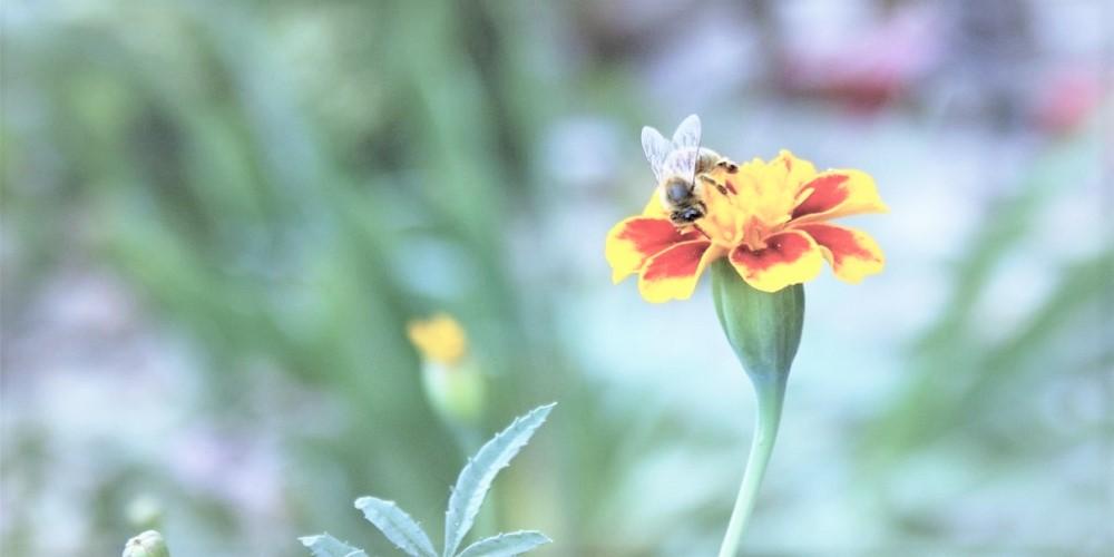 Klub na podporu včiel ponúka jeden z najzaujímavejších darčekov na trhu